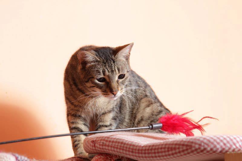 Kati & the Cat Whisperer